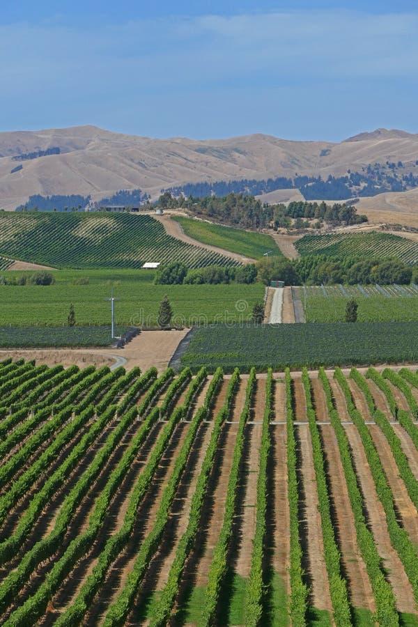 Feine Weine von einem Weinberg in Neuseeland lizenzfreie stockfotografie