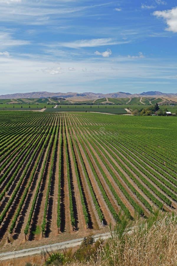 Feine Weine von einem Weinberg in Neuseeland lizenzfreie stockfotos