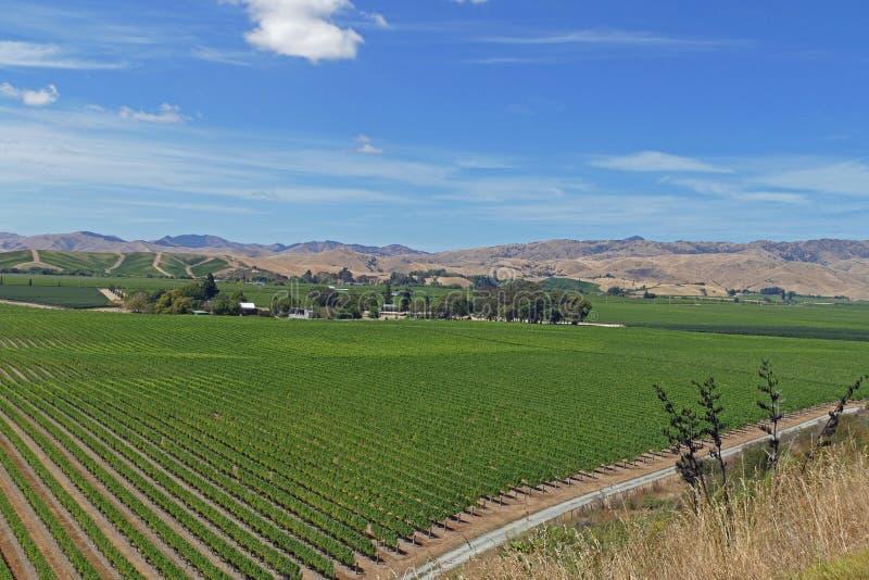 Feine Weine von einem Weinberg in Neuseeland lizenzfreies stockbild