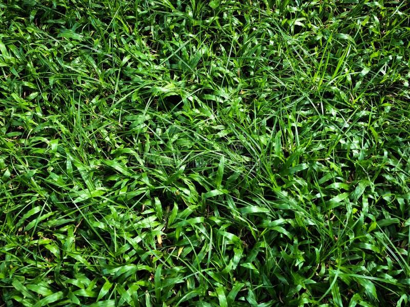 Feines grünes Gras auf dem netten Lichtfeld außerhalb des Bildes des natürlichen Hintergrundes lizenzfreies stockfoto