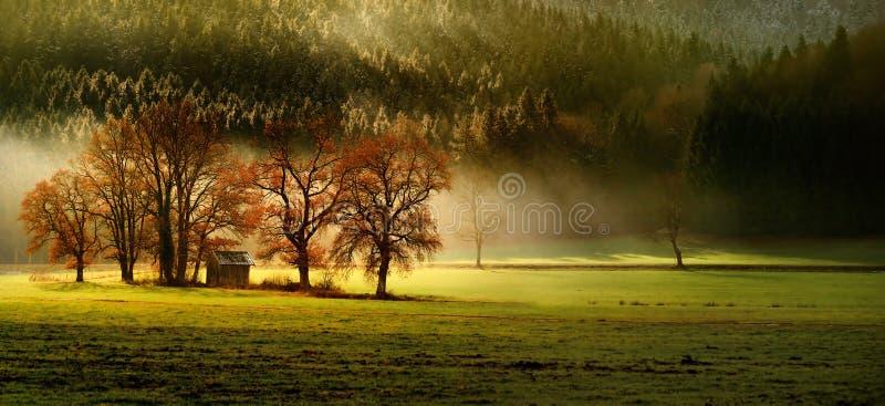 Feinstes Herbst lansdcape der bayerischen Natur mit einigen Bäumen und magestic Licht und Nebel lizenzfreie stockfotos