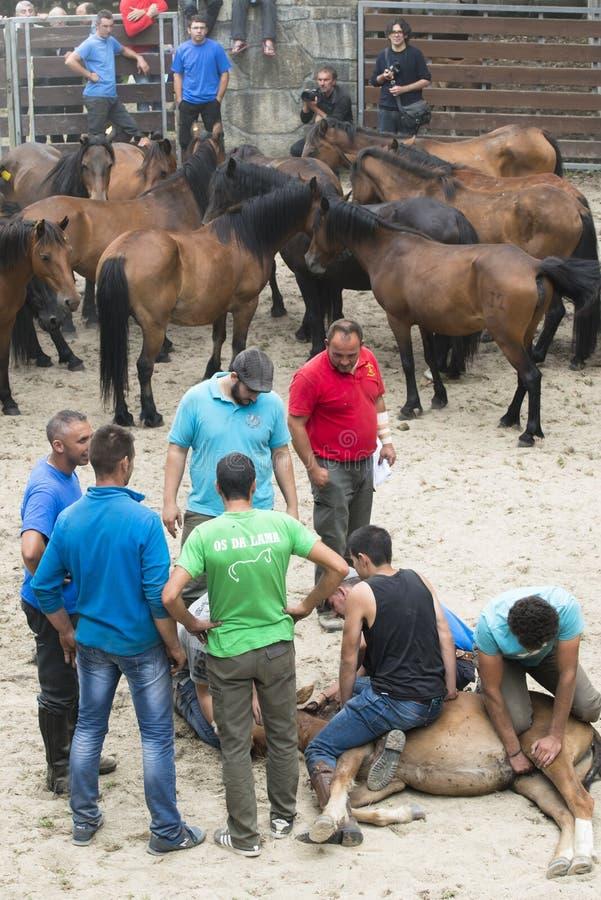 Feira de cavalo imagens de stock