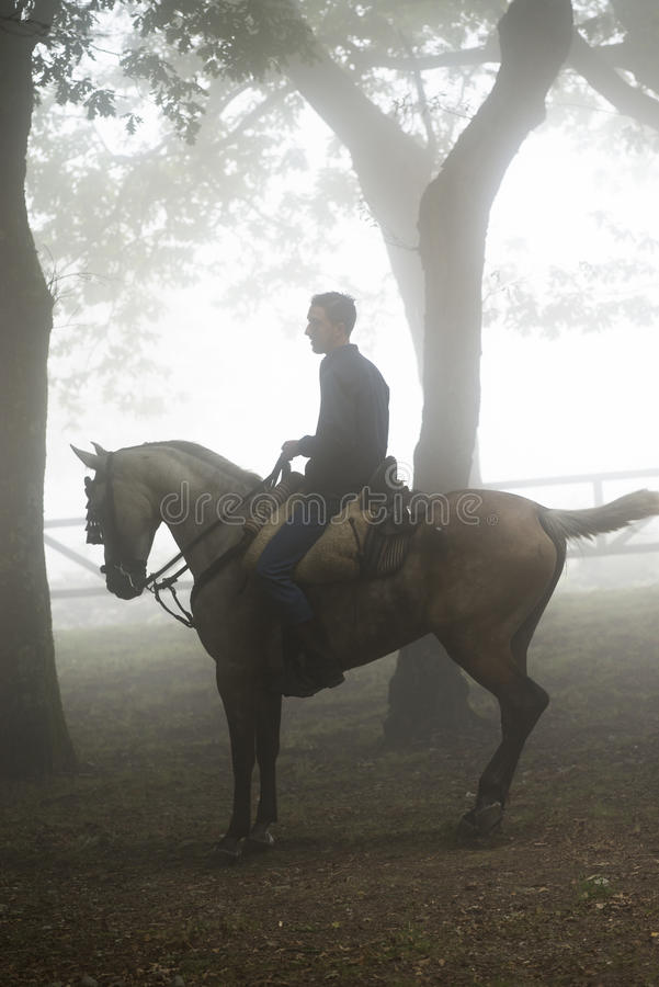 Feira de cavalo fotografia de stock royalty free