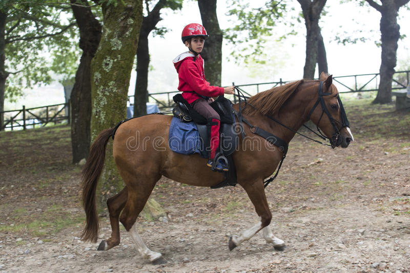 Feira de cavalo imagem de stock royalty free