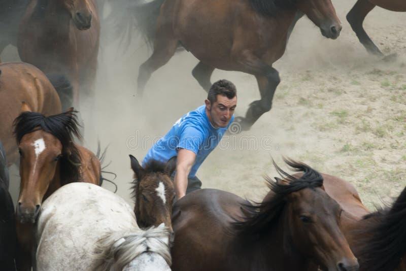 Feira de cavalo imagens de stock royalty free