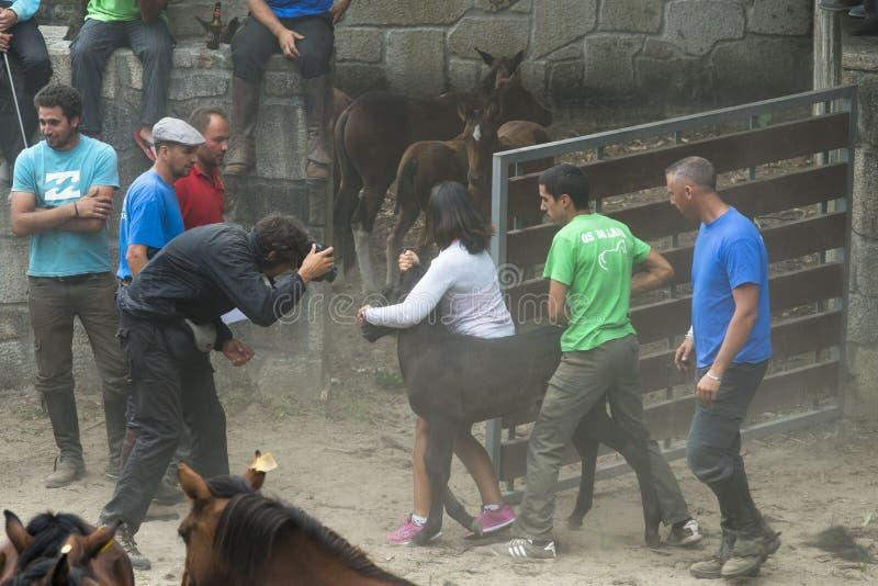 Feira de cavalo imagem de stock