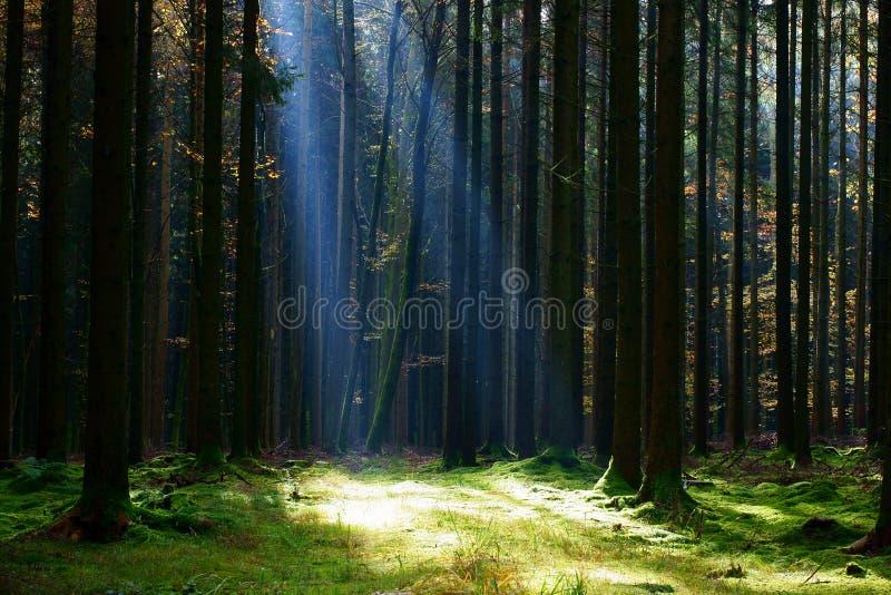 Feixe brilhante na clareira da floresta imagens de stock