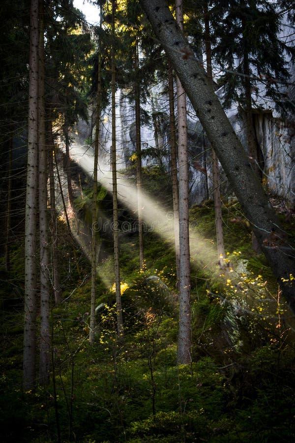 Feixe da luz solar fotografia de stock royalty free
