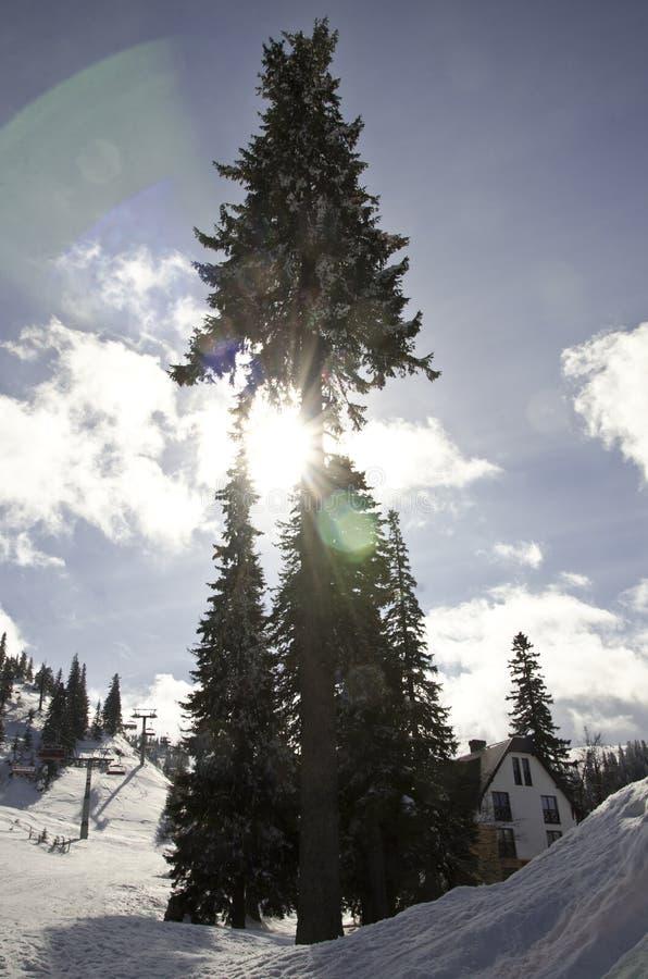 Feixe de Sun atrás da árvore foto de stock royalty free