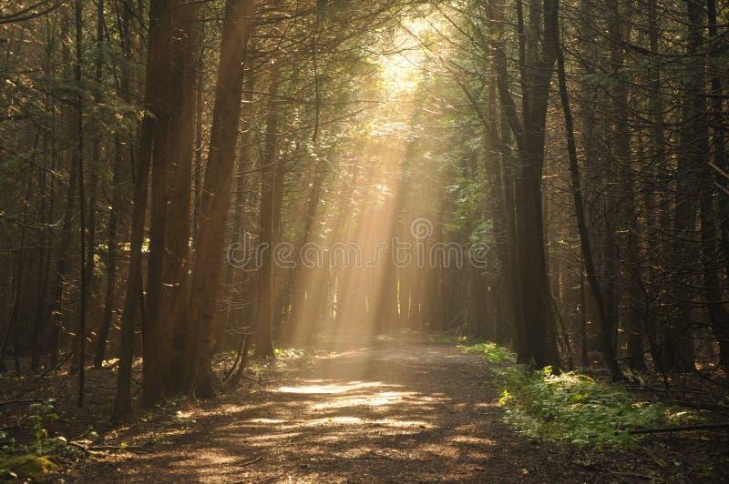 Feixe luminoso o brilho em Forest Path em Ontário foto de stock royalty free