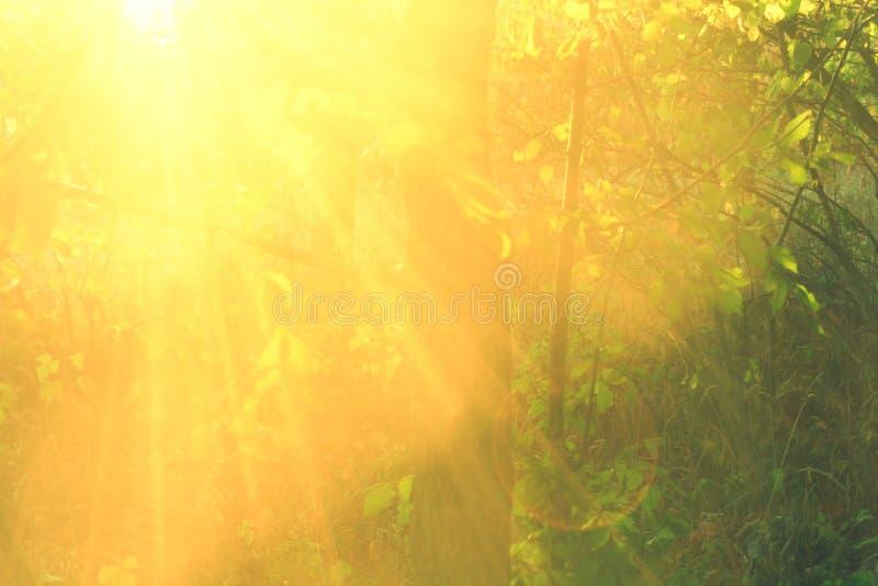 Feixes bonitos do sol no ascendente o mais forsest, próximo fotos de stock