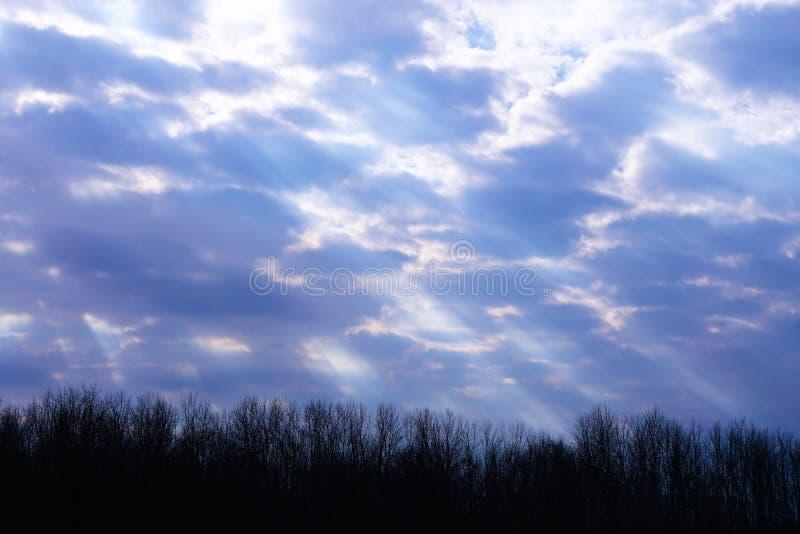 Feixes da luz solar gloriosa foto de stock royalty free