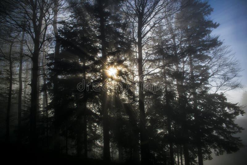 Feixes de Sun fotografia de stock