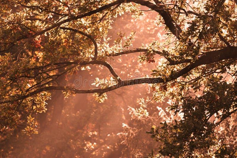 Feixes de Sun através das árvores