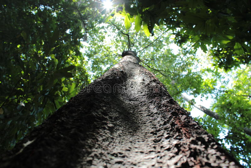 Feixes de Sun através das árvores fotos de stock