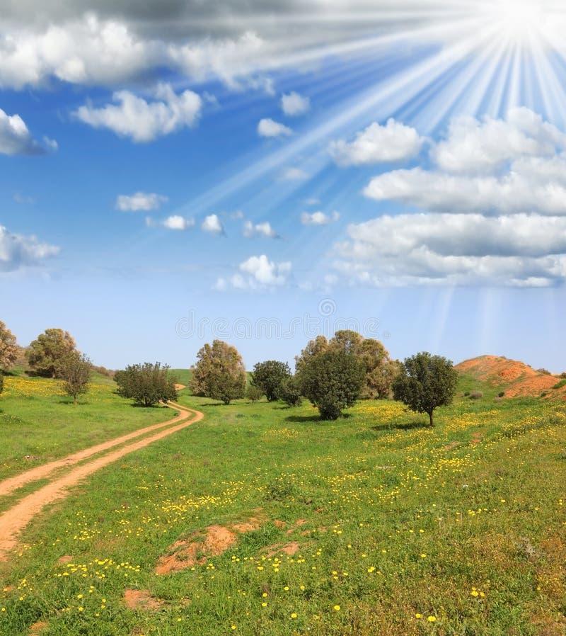 Feixes Sparkling do sol do meio-dia fotos de stock royalty free