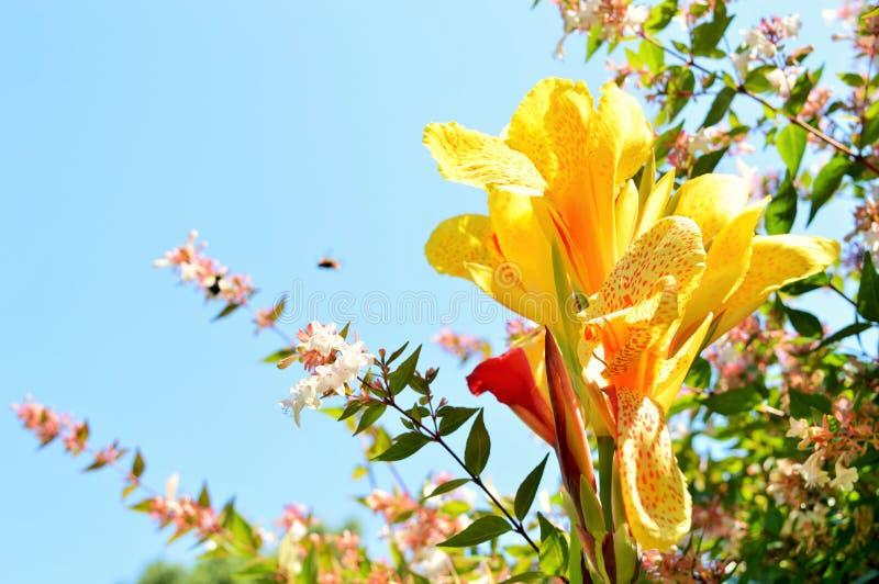 Fel på en blomma royaltyfria bilder