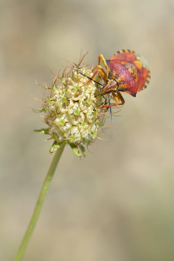 Download Fel som matar på blomman fotografering för bildbyråer. Bild av blomma - 37349261