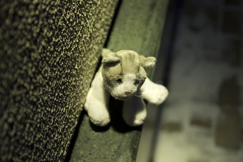 felande toy för katt fotografering för bildbyråer