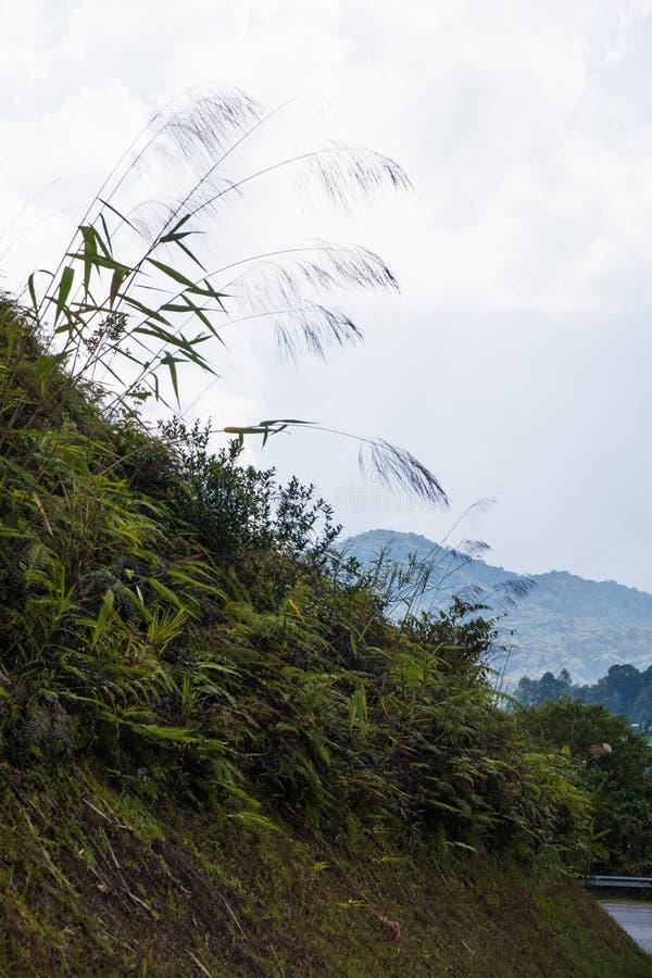 Felce davanti alle colline della piantagione di tè dell'altopiano di Cameron fotografia stock libera da diritti