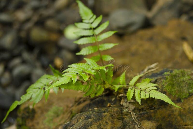 Download Felce della foresta fotografia stock. Immagine di macro - 30829592