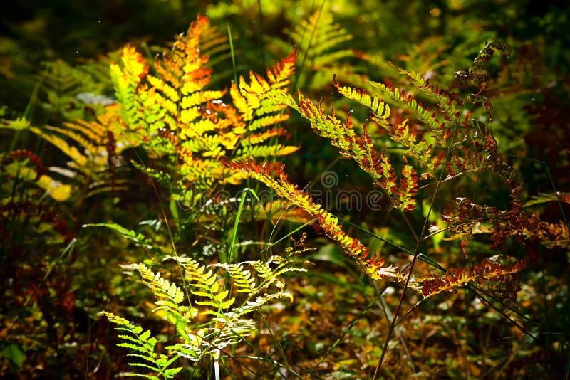 Felce in foresta fotografia stock