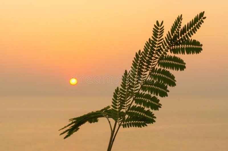 Felce tropicale della foglia sul sole arancio di tramonto sopra il mare fotografia stock