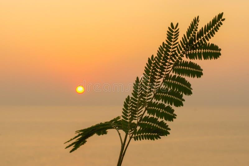 Felce tropicale della foglia sul sole arancio di tramonto sopra il mare fotografia stock libera da diritti