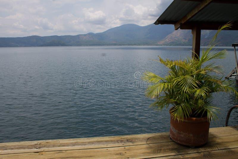Felce tropicale sul pilastro di legno della costa del mare con le colline nei precedenti fotografia stock