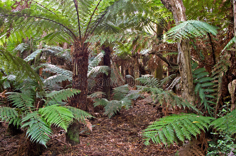 Felci e piante della foresta pluviale fotografie stock