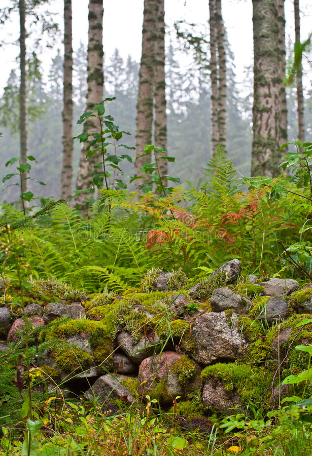 Felci in foresta fotografia stock