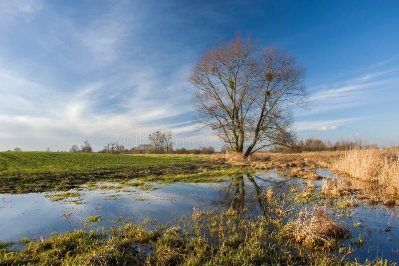 Feld überschwemmt mit Wasser und großem Baum lizenzfreies stockfoto