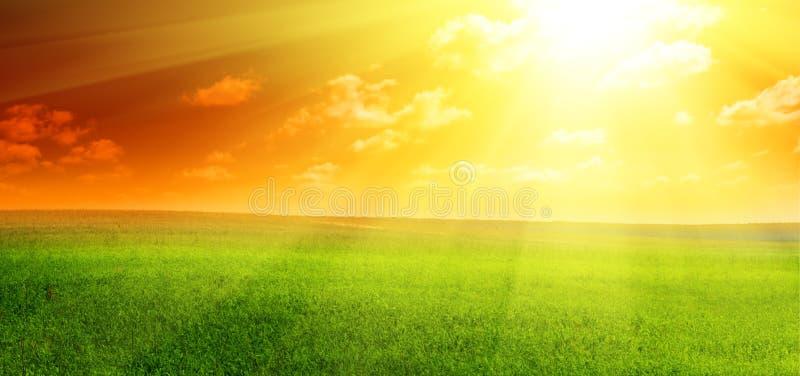 Download Feld stockfoto. Bild von weide, gras, bewirtschaften, horizont - 9093986