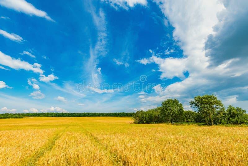 Feld com centeio e árvores foto de stock
