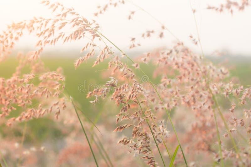 Feld der Blume lizenzfreies stockfoto
