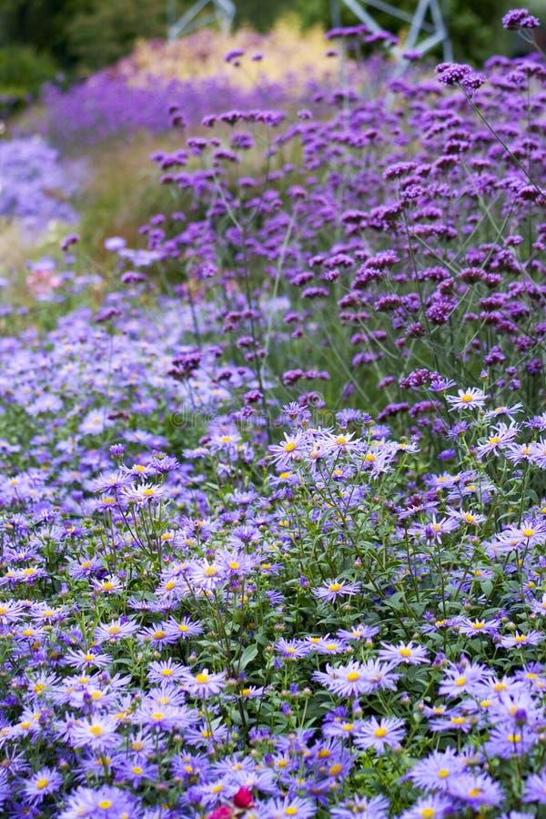 Feld der Blumen lizenzfreie stockfotos