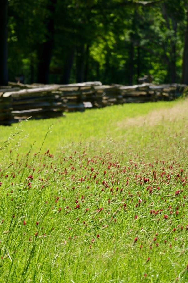 Feld der Blumen lizenzfreies stockbild
