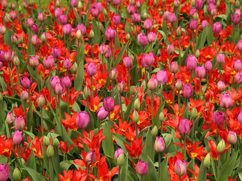Download Feld der Blumen stockbild. Bild von farbe, laub, frühling - 853789