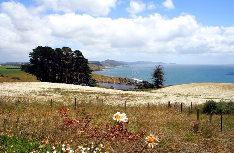 Feld der Blumen, Tasmanien, Australien lizenzfreies stockfoto