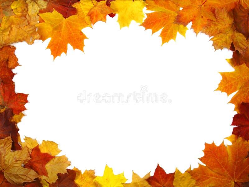 Feld der bunten Herbstblätter stockbilder