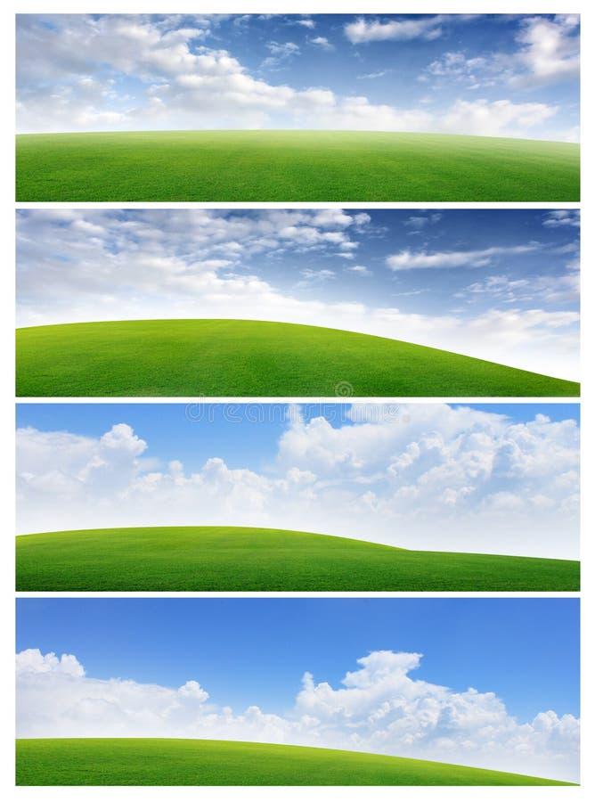 Feld der Fahnen des Grases und des blauen Himmels stockfotos