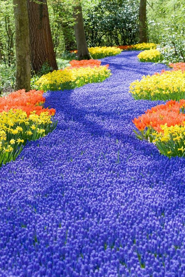 Feld der Frühlingsblumen stockfotografie