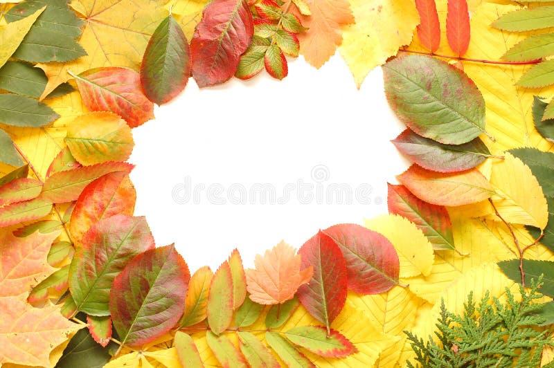 Feld der gefallenen Herbstblätter lizenzfreies stockfoto