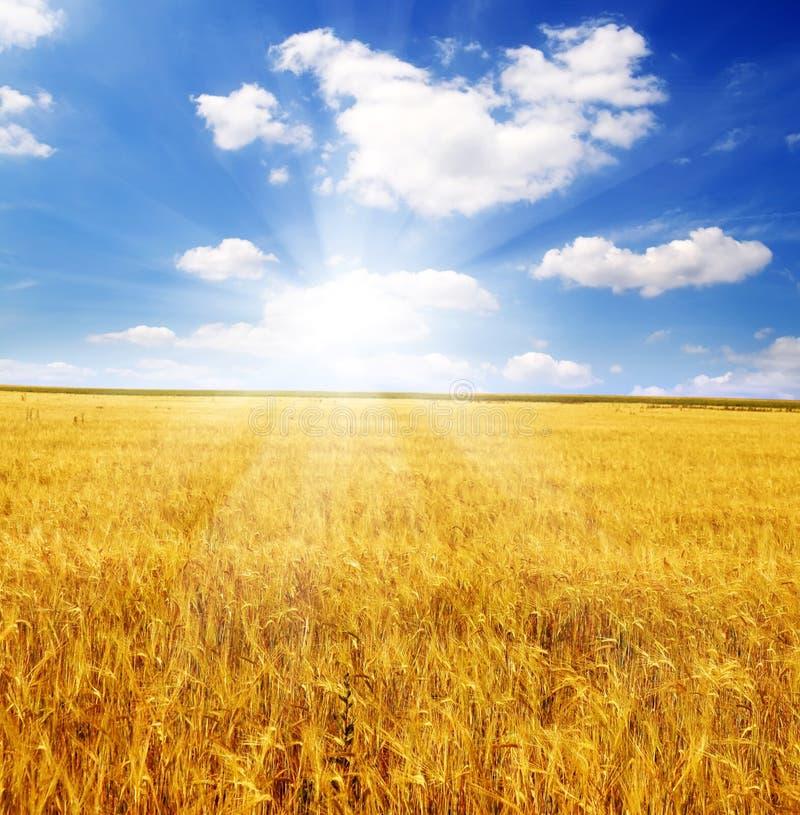 Feld der Ohren und des Sonnehimmels stockfoto