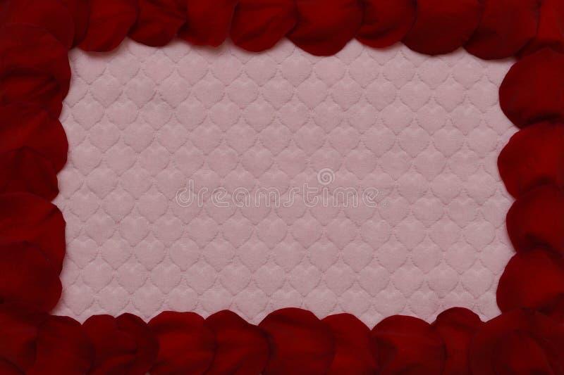 Feld der roten rosafarbenen Blumenblätter stockfotografie