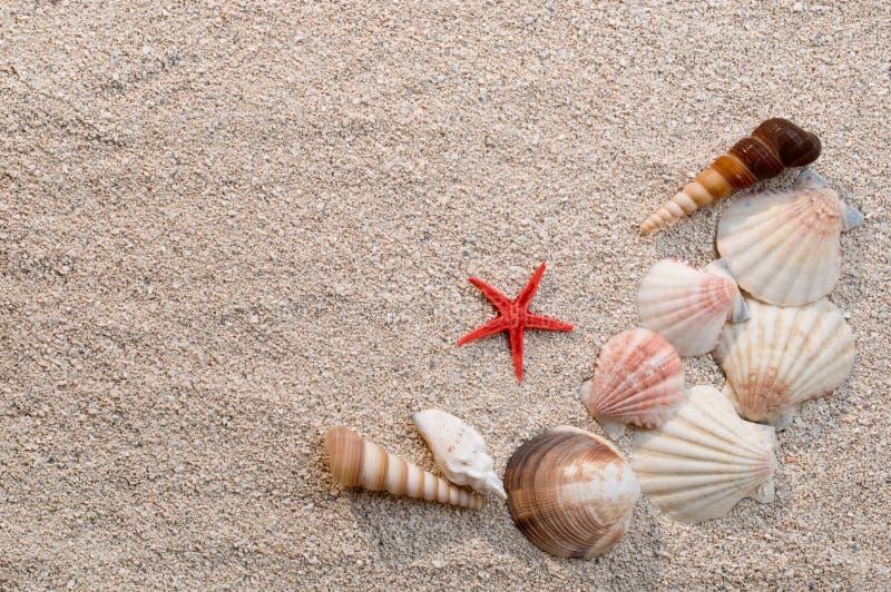 Feld der Seeshells und -Starfish auf Sand stockfotos
