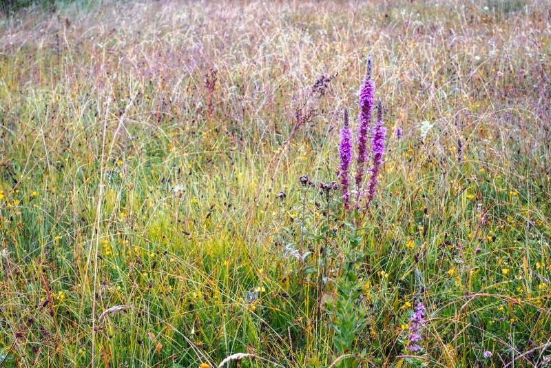Feld der wilden Blume nach Regen lizenzfreie stockbilder
