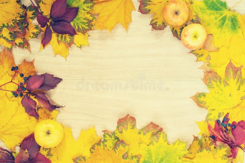 Feld des bunten Herbstlaubs und der Äpfel stockfotografie