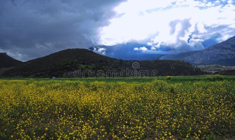 Feld des Gelbs stockbilder