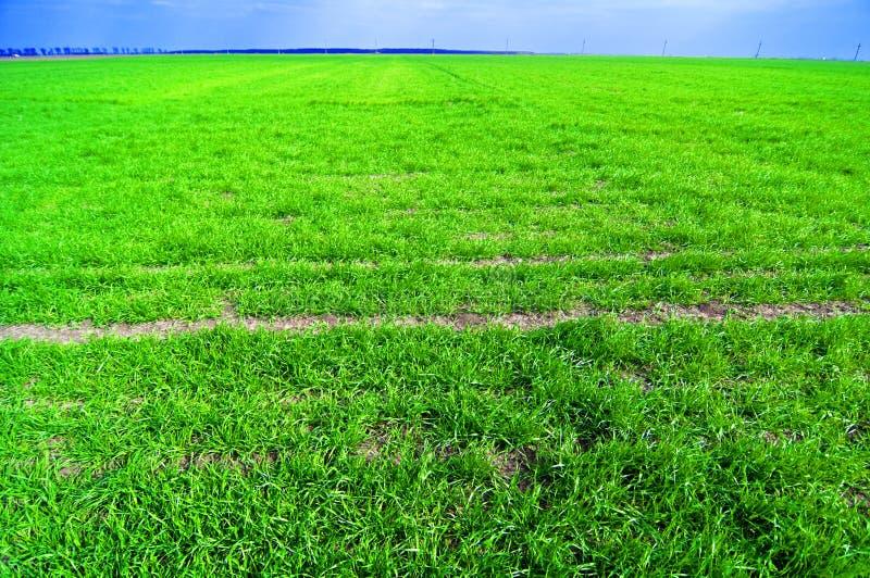 Feld des grünen Grases lizenzfreie stockbilder
